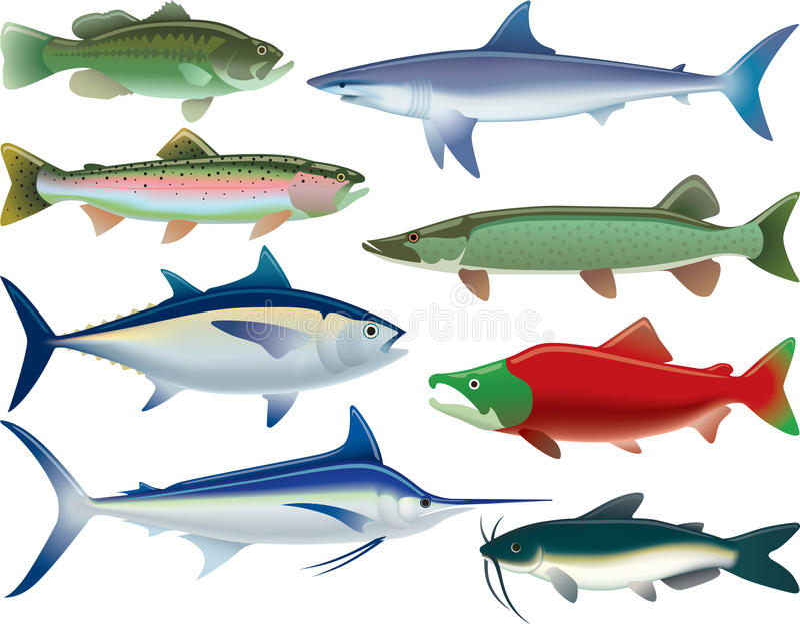 Αθλητικά ψάρια απεικόνιση αποθεμάτων