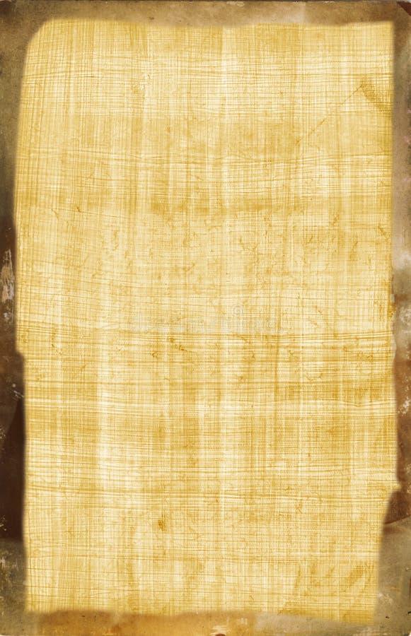 αιγυπτιακός πάπυρος στοκ φωτογραφίες