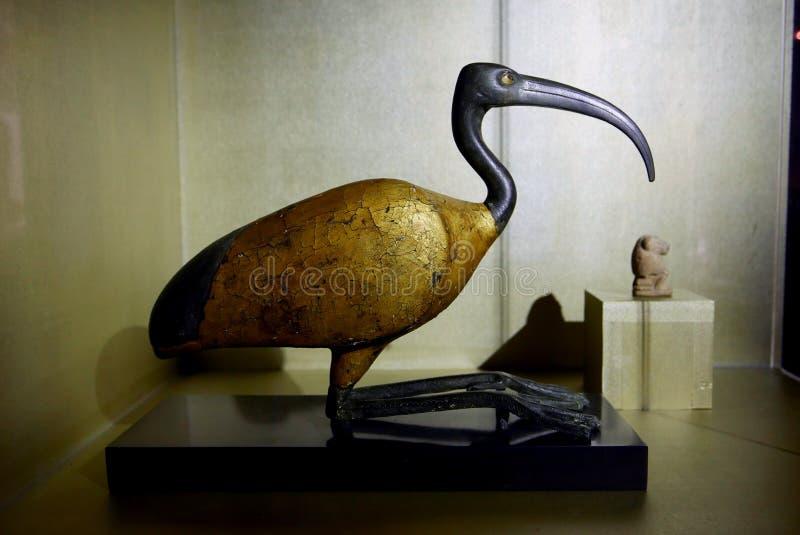 Αιγυπτιακός χαλκός και ξύλινη θρεσκιόρνιθα στοκ εικόνες