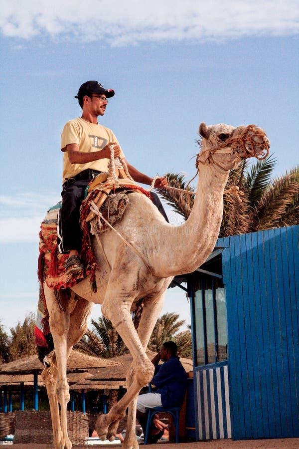 Αιγυπτιακό άτομο σε έναν γύρο καμηλών στοκ φωτογραφία με δικαίωμα ελεύθερης χρήσης