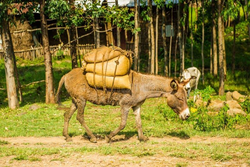 Αιθιοπία, Αφρική στοκ φωτογραφία με δικαίωμα ελεύθερης χρήσης