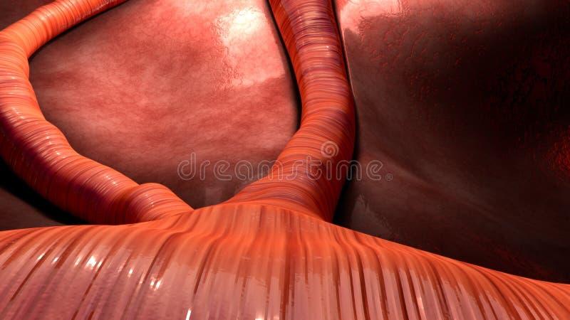 Αιμοφόρο αγγείο στοκ φωτογραφία με δικαίωμα ελεύθερης χρήσης