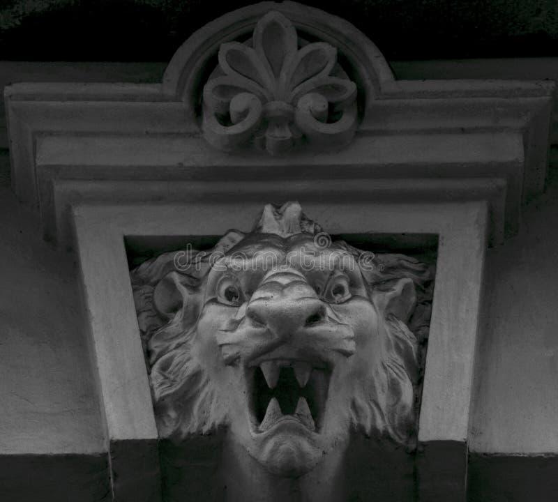 Αινιγματικός βρυχηθμός λιονταριών στοκ εικόνα με δικαίωμα ελεύθερης χρήσης