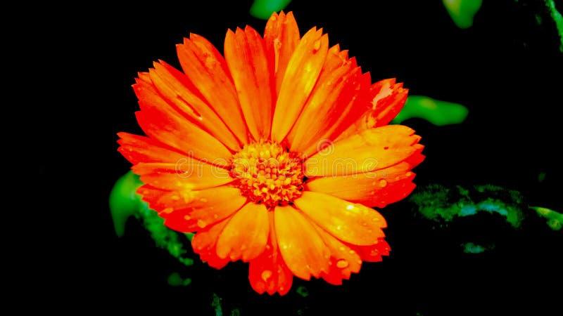 Αινιγματικός στο πορτοκάλι στοκ εικόνες