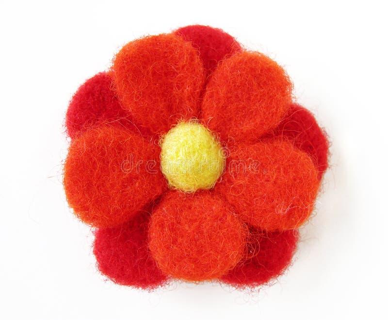 αισθητό λουλούδι στοκ εικόνα με δικαίωμα ελεύθερης χρήσης