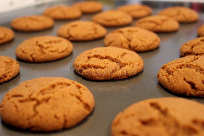 Αιφνιδιαστικά μπισκότα πιπεροριζών στοκ εικόνες