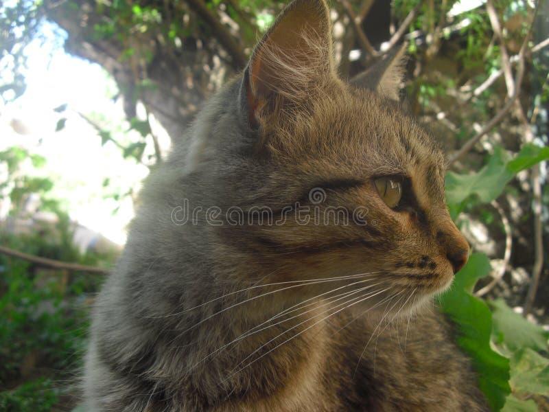 Αιφνιδιαστική γάτα στοκ εικόνα με δικαίωμα ελεύθερης χρήσης