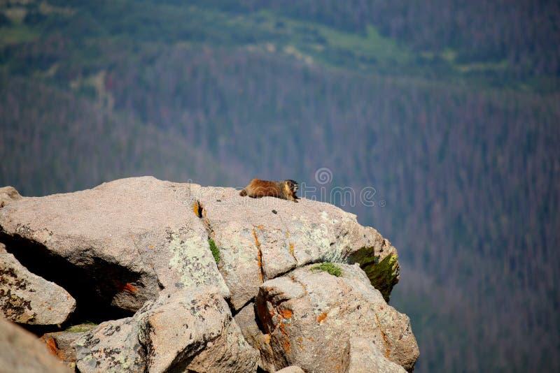 Αιχμή βουνών μαρμοτών στοκ φωτογραφίες με δικαίωμα ελεύθερης χρήσης