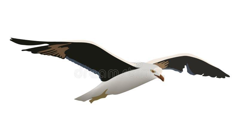 Αιωμένος πουλί γλάρων με τα εκτενή μαύρα φτερά, άσπρα φτερά, κίτρινο ράμφος, ο κοινός seagull ανύψωσης mew γλάρος ελεύθερη απεικόνιση δικαιώματος