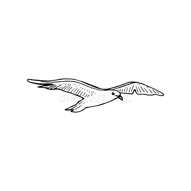 Αιωμένος πουλί γλάρων με τα εκτενή φτερά, σκίτσο μανδρών μελανιού, ο κοινός seagull ανύψωσης mew γλάρος, ελεύθερη απεικόνιση δικαιώματος