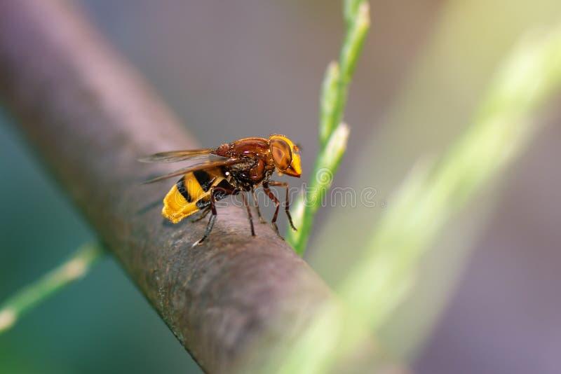 Αιωρηθείτε τη μύγα στο σωλήνα, κλείστε επάνω στοκ εικόνες με δικαίωμα ελεύθερης χρήσης