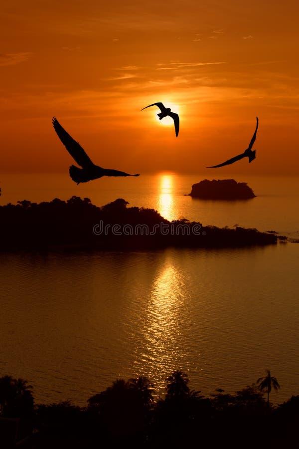 αιωρηθείτε seagull στοκ φωτογραφία