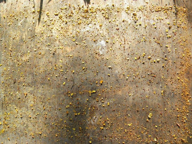 Ακάρεα βαρρόα, γύρη και κερί στο κάτω μέρος της κυψέλης στοκ φωτογραφία με δικαίωμα ελεύθερης χρήσης