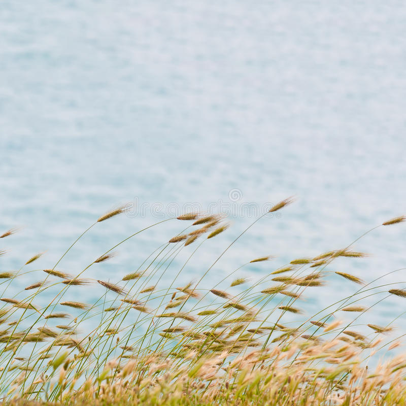 ακίδες στοκ φωτογραφία με δικαίωμα ελεύθερης χρήσης