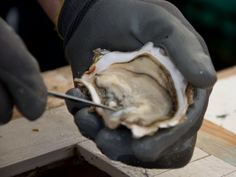 Ακατέργαστα και φρέσκα στρείδια Θαλασσινά, μια λιχουδιά για τον ουρανίσκο στοκ εικόνα με δικαίωμα ελεύθερης χρήσης