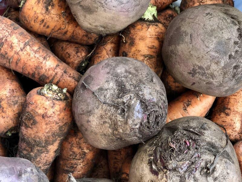 Ακατέργαστα λαχανικά: καρότα και τεύτλα στοκ εικόνες με δικαίωμα ελεύθερης χρήσης