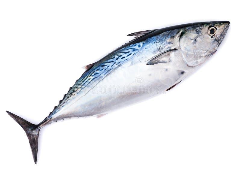 Ακατέργαστα ψάρια, παλαμίδα, που απομονώνεται στο λευκό στοκ φωτογραφία με δικαίωμα ελεύθερης χρήσης