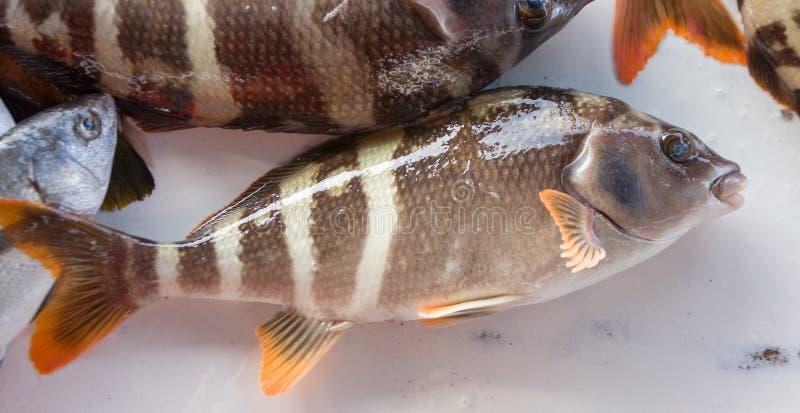 Ακατέργαστα ψάρια σε μια αγορά οδών στοκ εικόνα