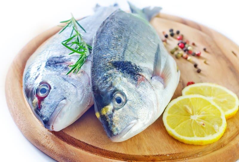 Ακατέργαστα ψάρια στοκ φωτογραφία με δικαίωμα ελεύθερης χρήσης