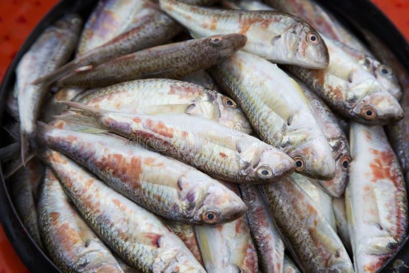 Ακατέργαστα ψάρια, surmullet - της Κριμαίας λιχουδιά στοκ φωτογραφία με δικαίωμα ελεύθερης χρήσης
