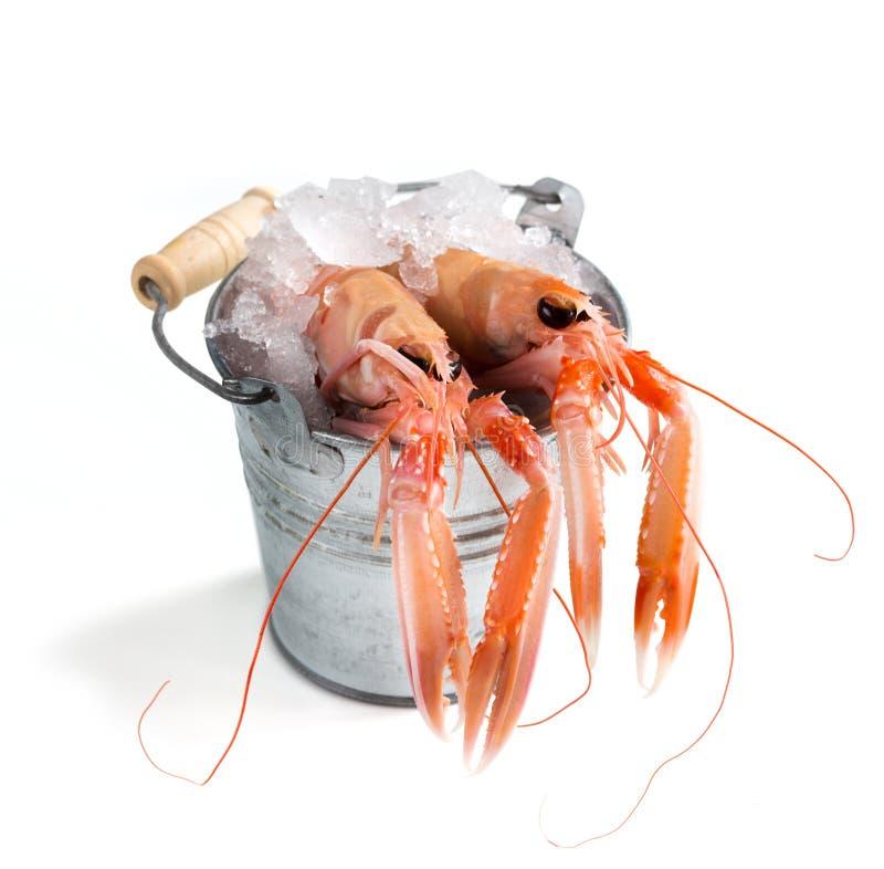 Ακατέργαστα langoustines στον πάγο σε έναν κάδο στοκ φωτογραφία με δικαίωμα ελεύθερης χρήσης
