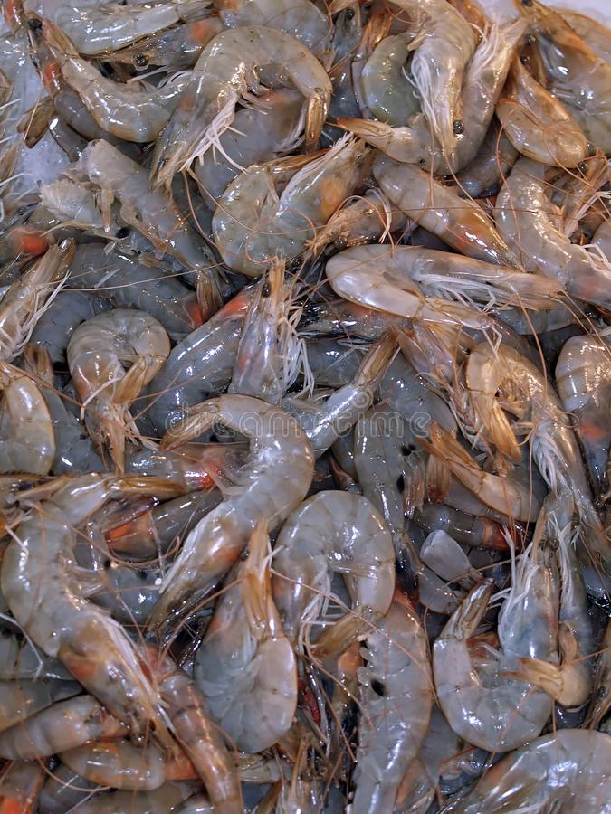 Ακατέργαστες γαρίδες στον πάγο σε μια αγορά τροφίμων στοκ φωτογραφίες
