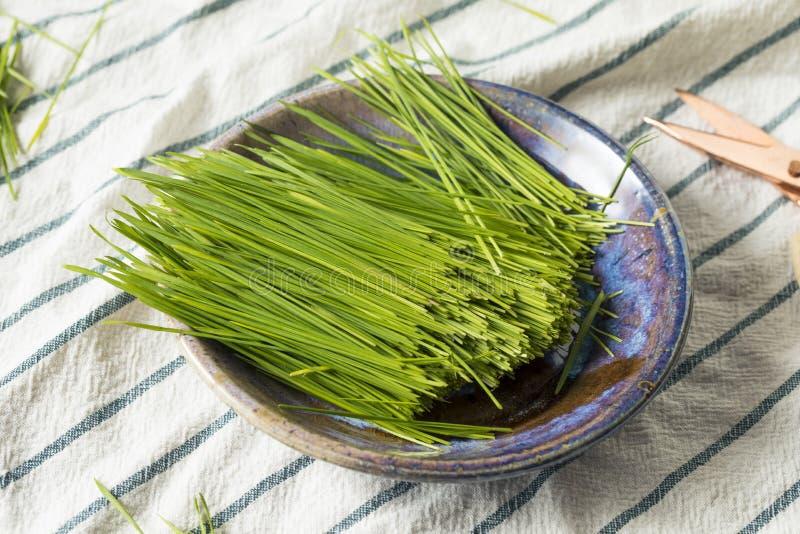 Ακατέργαστη πράσινη οργανική χλόη σίτου στοκ εικόνα με δικαίωμα ελεύθερης χρήσης