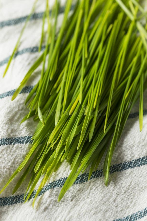 Ακατέργαστη πράσινη οργανική χλόη σίτου στοκ εικόνες με δικαίωμα ελεύθερης χρήσης