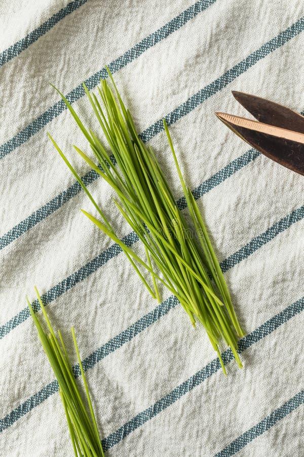 Ακατέργαστη πράσινη οργανική χλόη σίτου στοκ φωτογραφία με δικαίωμα ελεύθερης χρήσης