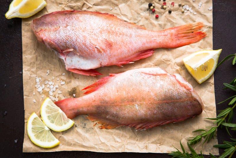 Ακατέργαστο Sebastes (κόκκινο grouper) στοκ εικόνες