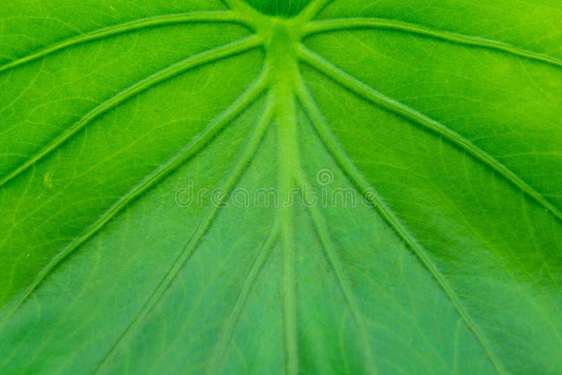 Ακραία κινηματογράφηση σε πρώτο πλάνο του φρέσκου πράσινου φύλλου στοκ φωτογραφίες