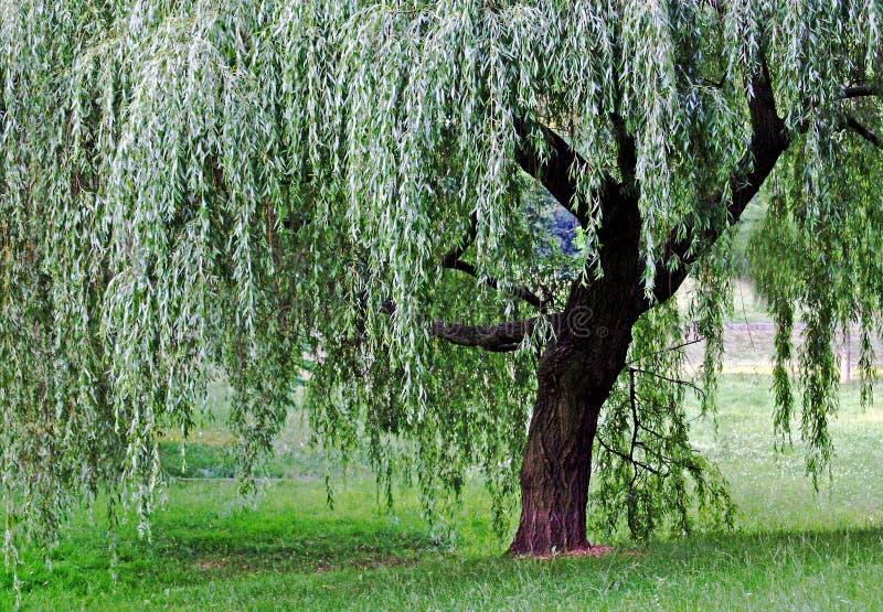 ακριβώς δέντρο στοκ φωτογραφίες