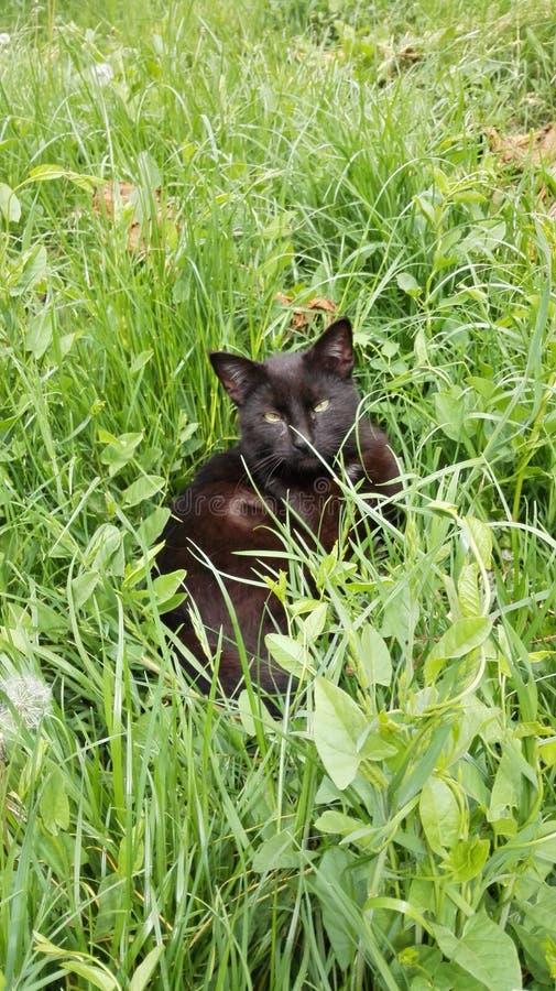 Ακριβώς μια μαύρη γάτα στοκ φωτογραφία με δικαίωμα ελεύθερης χρήσης