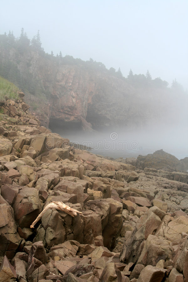 ακρωτήριο δ driftwood στοκ εικόνα με δικαίωμα ελεύθερης χρήσης