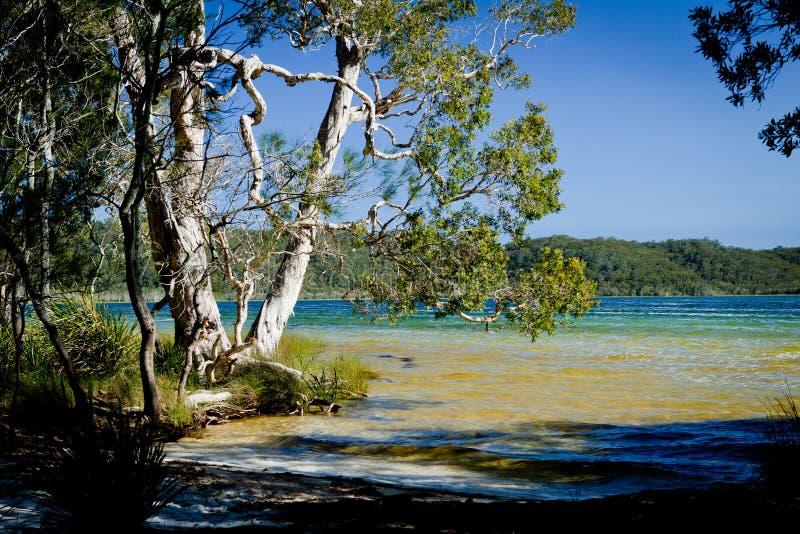 Ακτή λιμνών - λίμνη Smiths στοκ εικόνα με δικαίωμα ελεύθερης χρήσης