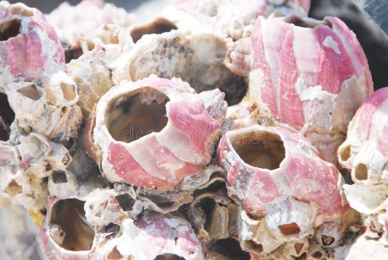 ακτή λαβίδων στοκ φωτογραφία