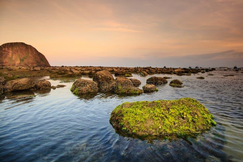 Ακτή με τους βράχους και το βρύο στοκ εικόνες