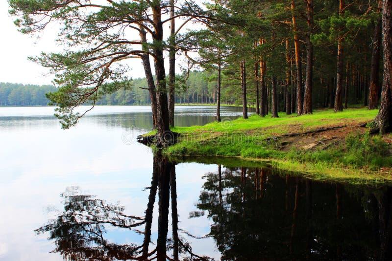 Ακτή μιας δασικής λίμνης στοκ φωτογραφίες
