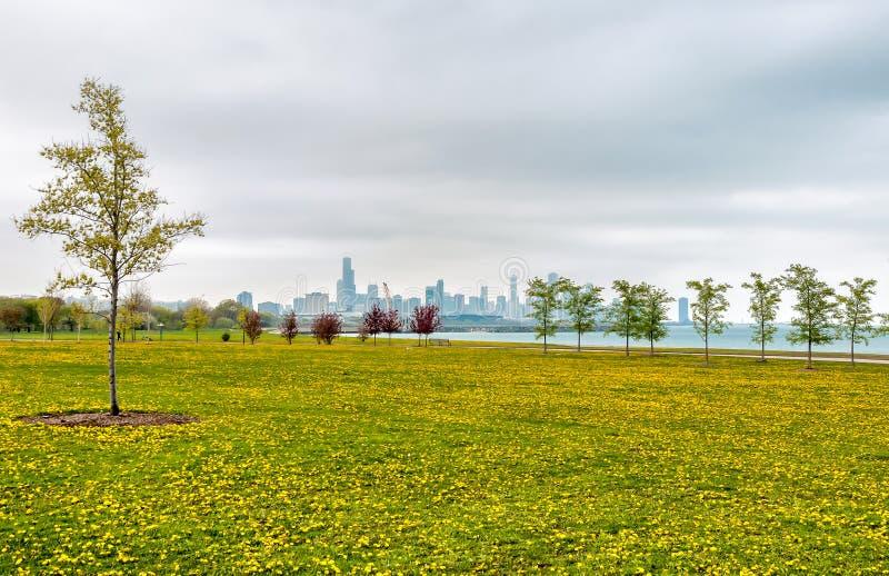 Ακτή νότιων λιμνών του Σικάγου, τοπίο άνοιξη του πράσινου τομέα με τα κίτρινα λουλούδια, και τα δέντρα στοκ φωτογραφίες