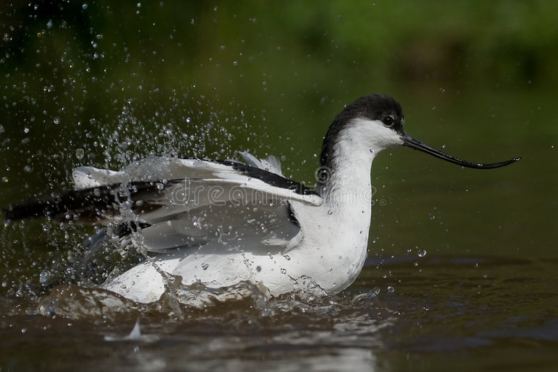 ακτή πουλιών στοκ εικόνα με δικαίωμα ελεύθερης χρήσης