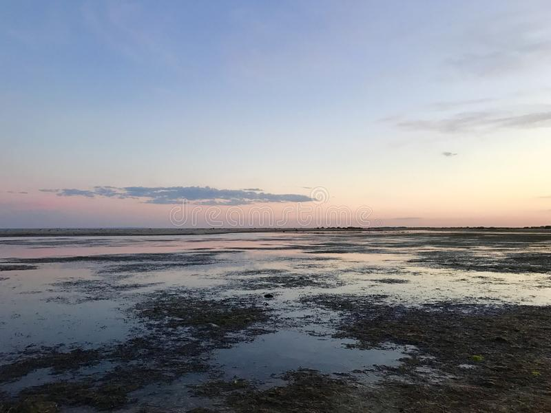 Ακτή στο ηλιοβασίλεμα με τους βράχους και το φύκι Ρόδινες αντανακλάσεις στοκ εικόνες