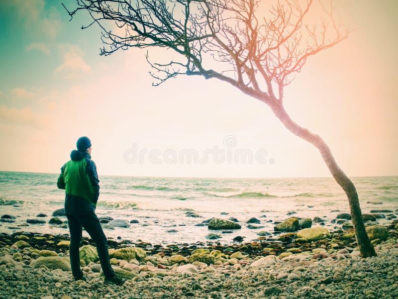 Ακτή της θάλασσας μετά από μια θύελλα Μπλε ουρανός επάνω από τη θάλασσα Μόνο πεσμένο δέντρο στοκ εικόνες με δικαίωμα ελεύθερης χρήσης