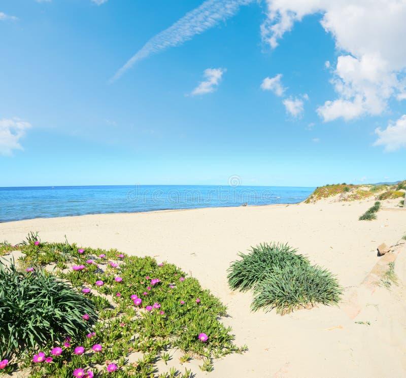 Ακτή Platamona στην άνοιξη στοκ εικόνα
