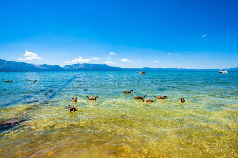 Ακτή Tahoe λιμνών στοκ φωτογραφίες