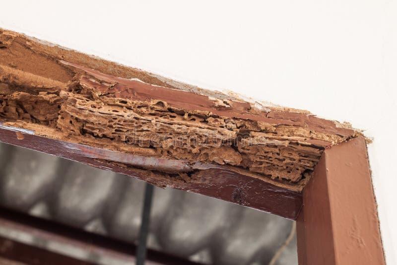 Ακτίνα ξυλείας της πόρτας χαλασμένη από τον τερμίτη στοκ εικόνα