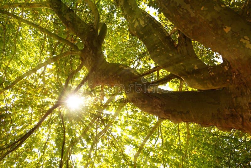 Ακτίνες ήλιων που λάμπουν μέσω treetop στοκ εικόνα με δικαίωμα ελεύθερης χρήσης