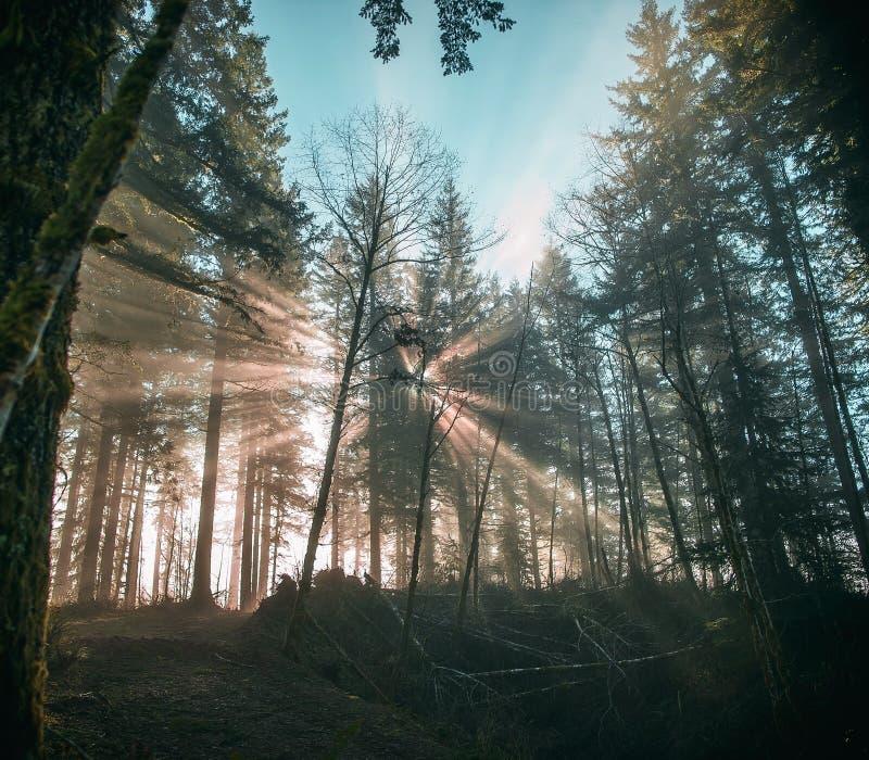 Ακτίνες ήλιων που εκρήγνυνται μέσω του δάσους στοκ εικόνες