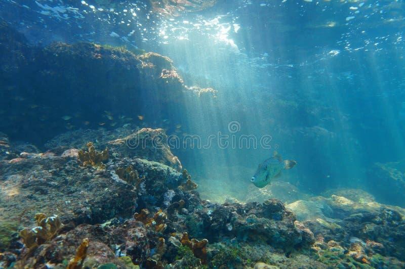Ακτίνες ελαφριού υποβρύχιου σε έναν σκόπελο με τα ψάρια στοκ εικόνα με δικαίωμα ελεύθερης χρήσης