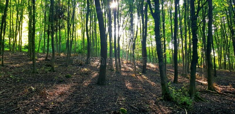 Ακτίνες του ήλιου στην πορεία στοκ εικόνα