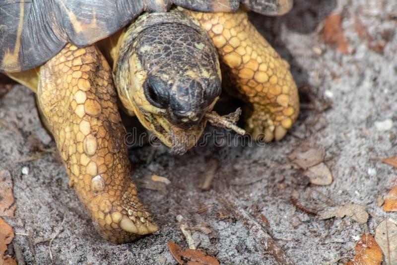 Ακτινοβολούν Tortoise στοκ εικόνα με δικαίωμα ελεύθερης χρήσης